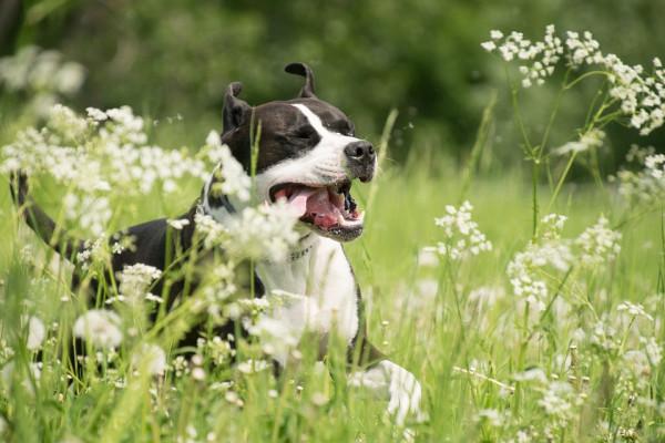 Hund am rennen auf Wiese