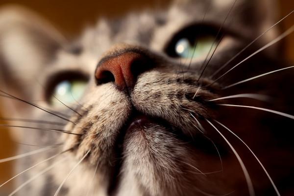 Katze Schnurrhaare