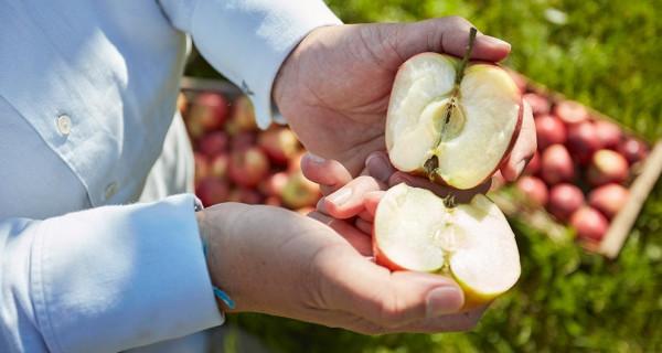 Manzanas orgánicas de Hipp