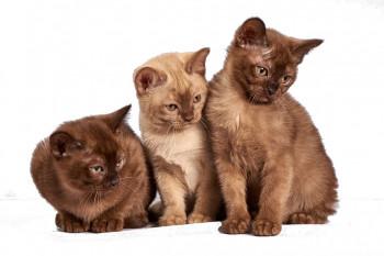 3 Katzen nach rechts schauend