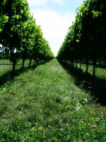 Vineyard in Trentino